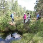Bebrų pažeista durpinė užtvanka / Peat dam damaged by beavers