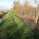 Įrengtas pylimas palaiko reikalingą vandens lygį Amalvos pelkės pietinėje dalyje.