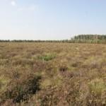 Atžalos iškirstuose plotuose sezono pabaigoje po dviejų pakartotinų kirtimų /The regrowth of birch at the end of growing season after two cuttings of shoots