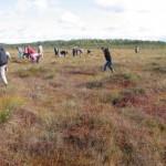 Talkos tikslas – pašalinti pelkėje dykstančius berželius / Voluntary action aims at elimination of birch shoots from the open bog
